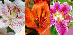 Sou louco pelas cores... dos lírios. As cores das flores inspiram a nossa vida! =) #Colors #Flores