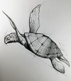 Turtle draw in pencil, original artwork Cool Art Drawings, Pencil Art Drawings, Art Drawings Sketches, Easy Drawings, Tattoo Drawings, Fantasy Drawings, Animal Sketches, Animal Drawings, Turtle Sketch
