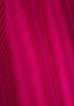 Chameleon Bright Pinkpink Purplehot Pinkcolor Fuchsiarose