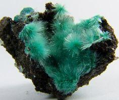 Aurichalcite - 79 Mine, Gila County, Arizona, United States of America