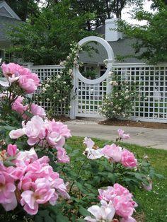 Beyond the garden gate.....