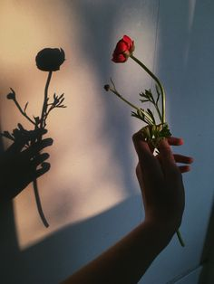 Ideas photography inspiration ideas pictures for 2019 Hand Photography, Shadow Photography, Tumblr Photography, Amazing Photography, Photography Aesthetic, Photography Flowers, Photography 2017, Photography Tutorials, Photography Ideas