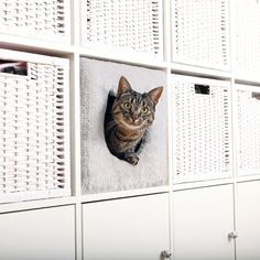 Cat cave for IKEA shelves Kallax or Expedit - Modern Ikea Kallax Regal, Ikea Expedit, Ikea Shelves, Shelves For Cats, Shelving Units, Cat Hacks, Cat Diys, Cat Cave, Cat Room