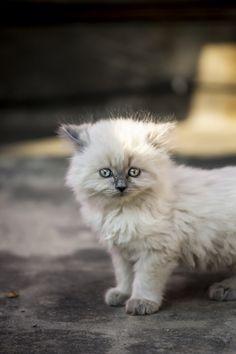 kittens | Tumblr