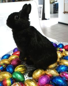 Bunny Is on the Lookout for More Shiny Loot