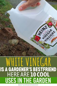 Vinegar helps ward off insects that attack plants, such as the fruit fly, also known as Drosophila Melanogaster. Veg Garden, Lawn And Garden, Garden Planters, Garden Pests, Garden Care, Container Garden, Vegetable Gardening, Healthy Beauty, Health And Beauty Tips