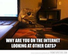 Overly Attached Kitty…