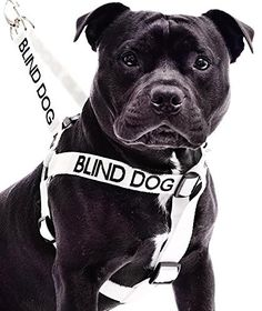 Blind Dog White Color Coded Alert Warning L XL Nonpull Dog Harness Prevents Accidents By Warning Others of Your Dog in Advance ** Check out the image by visiting the link.(This is an Amazon affiliate link)