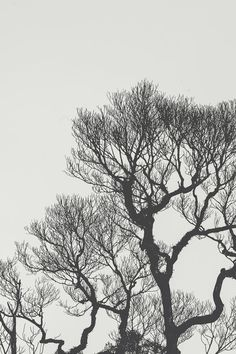 Free black and white photography · Pexels · Free Stock Photos Close Up Photography, Tree Photography, Photography Portfolio, Monochrome Photography, Black And White Photography, Free Photos, Free Stock Photos, Scratch Art, Bare Tree