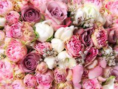 rose full hd