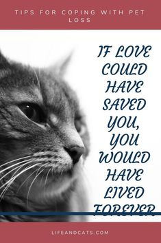 Strategies to cope with the grief of pet loss. Self Care. Memorials to your pet. Help your friend cope with pet loss. Help your children cope with pet loss Pet Quotes Cat, Pet Loss Quotes, Animal Quotes, Losing A Cat Quote, Losing A Pet, Love Dogs, Love Pet, Pet Loss Grief, Loss Of Pet