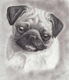 Perky Pug Canvas Print / Canvas Art by Laurie McGinley