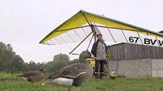 Inédit : Un pilote d'ULM vole en compagnie de ses oies