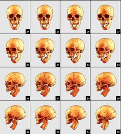 """""""360 Skull Vector"""" is a high quality, royalty-free vector set that will add dimension and amazing complexity to your designs. This vector set features 46 skull angles in vector form with black outline. *Please note this file is 160mb"""