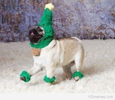 christmas tree dog - Click image to find more Humor Pinterest pins
