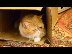 Chester the cat watches his world from his box (with Garfield)