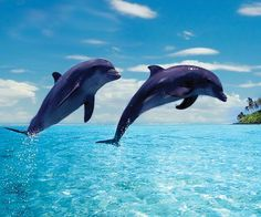 http://adventuresfortwo.com/ #beach #tropical #palm #sand #paradise #travel #dolphin