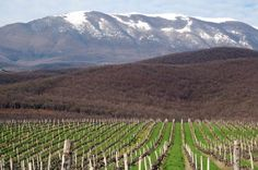 Find out the amazing Wine Travelling Destinations to be your special dine and wine destinations. Get the local wines and the international tastes together. Wine Vineyards, Vitis Vinifera, Places Of Interest, Wine Country, Wine Tasting, Beautiful Landscapes, The Locals, The Good Place, Wineries
