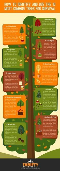 With the popularity of camping, hiking, and trailing at an all-time high, there comes a great demand to known even the most basic of survival skills before heading out on your next outdoor trip. Survival Life, Survival Food, Homestead Survival, Wilderness Survival, Camping Survival, Survival Prepping, Emergency Preparedness, Survival Skills, Survival Hacks