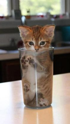 In The Glass | Cutest Paw