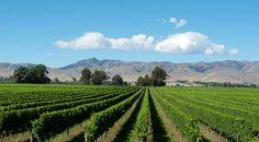 Winery itinery, NZ, North Island