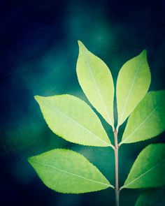 "Nature Photography - green blue navy teal leaf botanical art print  - ""Designer Leaves"" by CarolynCochrane"