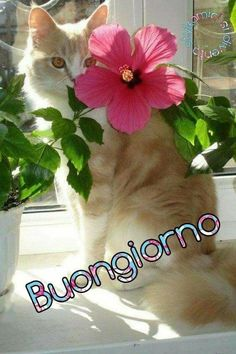 Plants, Messages, Bonjour, Italy, Plant, Planets