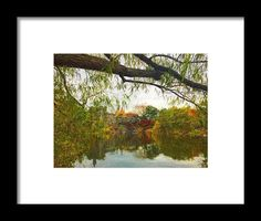 Belvedere Autumn Framed Print By Alice Gipson