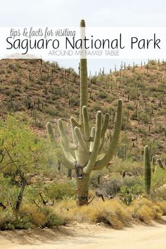 Get outside this weekend and visit a National Park! When you're in the desert, at the Saguaro National Park, you need to take some additional precautions, but the experience of standing next to the majestic saguaros is definitely something that should be Best Places To Travel, Places To Visit, Travel Pics, Travel With Kids, Family Travel, Peanut Butter Banana Bread, Park Around, Wanderlust, Arizona Travel