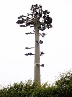 False Tree Mobile Phone Mast