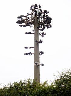 False Tree Mobile Phone Mast