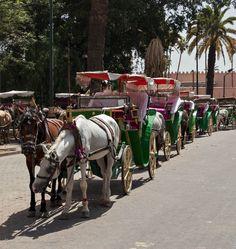 Horse And Carriage Djemaa el-Fna Market by Randy Dorman