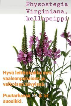 Plant Identification, Planting Flowers, Virginia, Plants, Flora, Plant