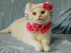 cats with hat and like OMG! get some yourself some pawtastic adorable cat apparel!