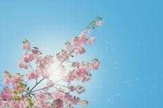 Idea for Nature, Sky, Flowers