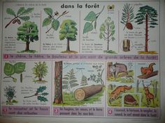 Affiche : Dans la forêt