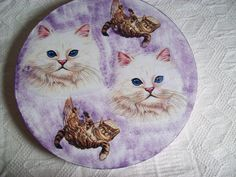 Caixa com gatos
