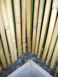 "Bamboo poles placed in Serenity ""Trough"" planters from Studio 04."