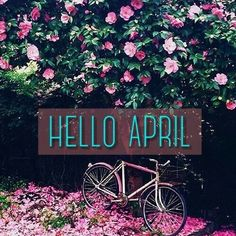 Find images and videos about spring, april and new month on We Heart It - the app to get lost in what you love. Facebook Tumblr, Photos For Facebook, April Birth Flower, Birth Flowers, April Clipart, New Month Wishes, April Images, Neuer Monat, April April