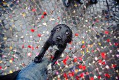 構わずにはいられない見つめる犬の画像 3