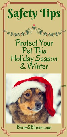 Protect your pets this holiday and winter season with these safety tips! #Pets #Animals #Dogs #Cars #Winter