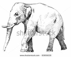 hand drawn sketch of asian elephant illustration done in black ink and isolated on white background by Attitude, via ShutterStock