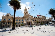 stock photo : pigeons flying over city hall of cape town, south africa South African Homes, University Of Cape Town, Safari, South Afrika, Africa Destinations, Cape Town South Africa, Swansea, Most Beautiful Cities, Summer Travel