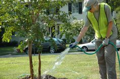 Watering trees http://www.acenature.com/how-to-plant-a-tree/