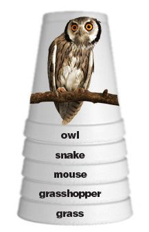 Make your own Food Chain Stacking Cups. Neat idea for a nature activity or Outdoor Science School program. This website has it allll. good ideas for science night 4th Grade Science, Middle School Science, Elementary Science, Science Classroom, Teaching Science, Science Education, Science For Kids, Classroom Activities, Teaching Habitats