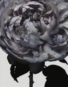 even in black and white this flower is beautiful