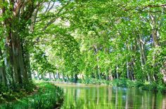 The Canal du Midi is defined by its beauty, lined with plane trees and crossed by pretty arched bridges. The pace of life is relaxed and lulls you into unwinding as your luxury hotel barge meanders gently downstream.  Read more about our Canal du Midi cruises here: http://www.gobarging.com/cruises-in-canal-du-midi