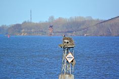The abandoned conveyor in Delanco, NJ, is seen in the background, while the Andalusian female osprey roosts in her nest.