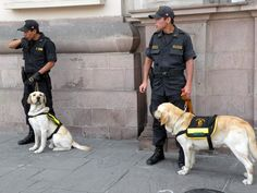 I felt extremely safe in historic Lima, Peru.  Not only it it very clean (surprisingly so compared to other third world capitols) but there is a strong presence of police.  The dogs in this picture are bomb sniffing dogs which you will see a lot of.