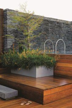 Bucida Molineti Garden Ideas Pinterest Minimalist